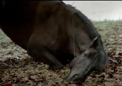 Mylene farmer cheval clip je te dis tout