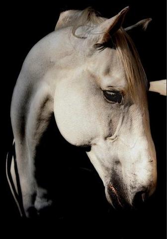 Photo cheval Zsuzsanna Wagenhoffer