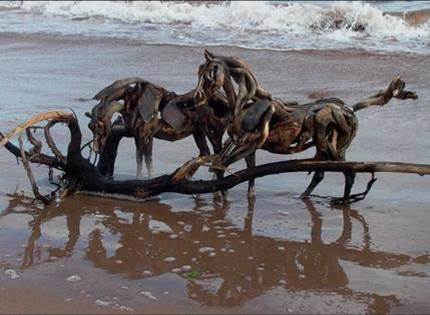 HEATHER JANSCH sculptures-chevaux en bois flotté