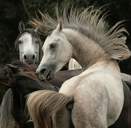 Photo cheval Zsuzsanna Wagenhoffer